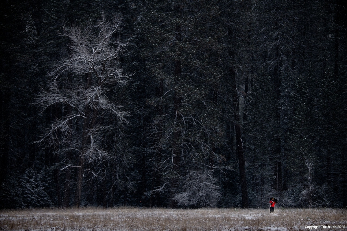 Yosemite Tree in Snow Woman in Red