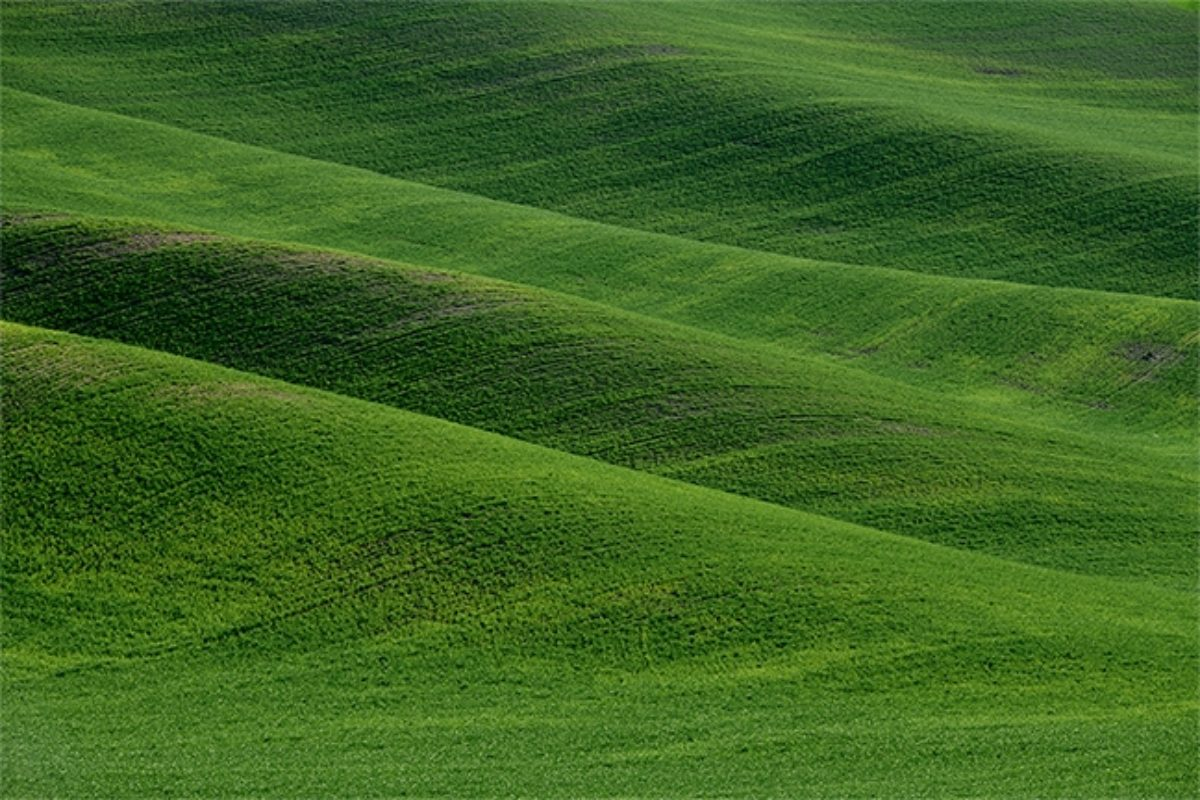 The Challenges of the Palouse